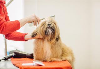 Curso de Cabeleireiro e Estética Canina bLearning